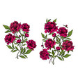 beautiful peony flowers as decorative elements on vector image vector image