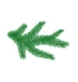 green spruce branch vector image