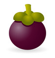 mangosteen isolated vector image