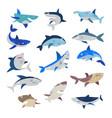 shark cartoon seafish with sharp teeth in vector image