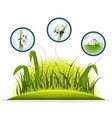 funny insect character inside spring grass vector image vector image