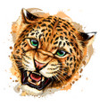 growling leopard color hand-drawn portrait vector image vector image
