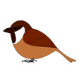 sparrow bird on white background vector image vector image