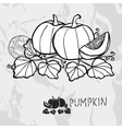 Hand drawn whole and sliced pumpkins vector image