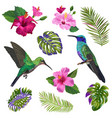 hummingbird with tropical flowers vector image vector image