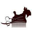 dog scissors and comb vector image vector image