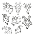 Goat head abstract isolated vector image vector image