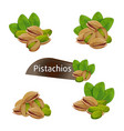 pistachios kernel in nutshell with leaves set vector image vector image