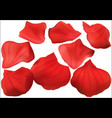 red rose petal collection vector image vector image
