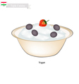 Tajik Yogurt or Fermented Milk Cream vector image vector image