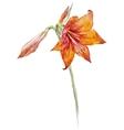 Watercolor lotus flowers vector image vector image