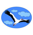 flying stork on white background vector image vector image