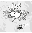 Hand drawn whole and sliced beet vector image