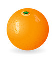 orange isolated vector image