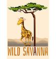 Wild savanna theme with giraffe vector image