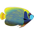 angelfish vector image vector image