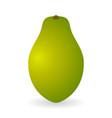 papaya isolated vector image