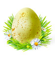 yellow egg with spots on grass vector image