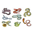 set of various snake viper cobra and other vector image