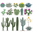 cactus and succulent set vector image vector image