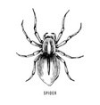 hand drawn brazilian spider vector image vector image