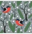 seamless pattern winter birdss spruce berries fir vector image