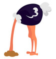 ostrich with head in sand on white background vector image vector image