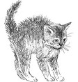 sketch a small frightened kitten vector image vector image