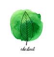leaf of chestnut tree vector image