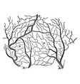 arteries and veins of a section of the skin