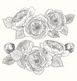 blooming flower hand drawn botanical blossom vector image
