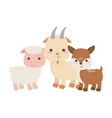 cute little goat sheep and deer animals cartoon vector image