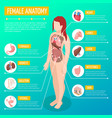 female anatomy isometric poster vector image