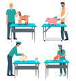 veterinarian doctor treat animals in hospital vector image vector image