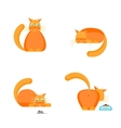Cute Orange Cat Set vector image