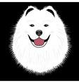 Dog samoyed buddy puppy vector image