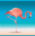 exotic pink flamingo walking on the hot summer vector image vector image