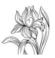iris 1 vector image vector image