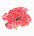 poppy watercolor floral floral decorative element vector image vector image