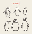 set penguins hand drawn sketch vector image