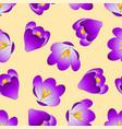 purple crocus flower on beige ivory background vector image vector image