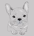cute black white french bulldog for t shirt vector image