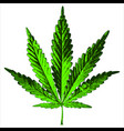 green hemp leaf vector image vector image