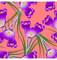 purple crocus flower on orange red background vector image vector image