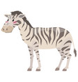 zebra standing on white background vector image
