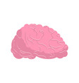 brain isolated human brains on white background vector image