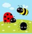 bee bumblebee spider ladybug ladybird lady bug vector image vector image