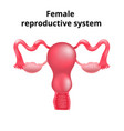 female reproductive system human vector image