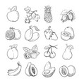 hand drawing doodle fruits for vector image vector image