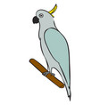white parrot on white background vector image vector image